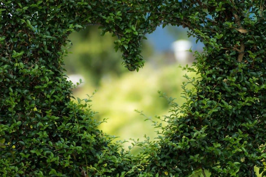 Afirmación: elijo amor